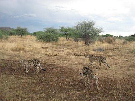 Cheetah Park / Otjiwarongwe